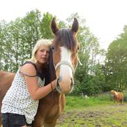 Welsh Pony (sec B) Asti