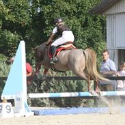 Welsh Pony (sec B) Daysie