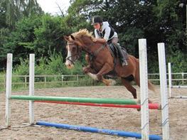 Welsh Cob (sec D) Okali D'alloue * Drømme ponyen*
