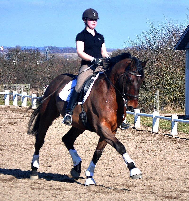oldenborg hest