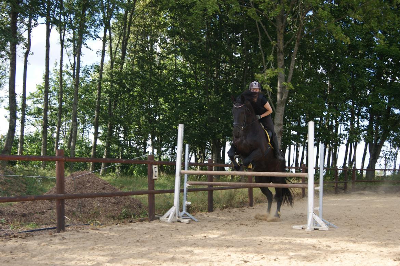 Frieser Roose - Jaja, Roose kan også hoppe. billede 4