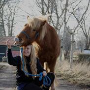 Islænder Stjarni fra Ringeby <3