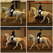 Connemara Hesselholt's Casano B-pony