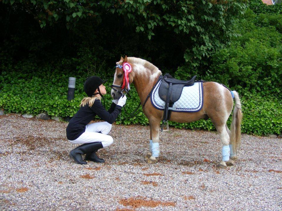 Pondus Horse