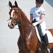 Dansk Varmblod Weltsieger