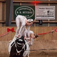 Anden særlig race Rollo (rideskole hest)