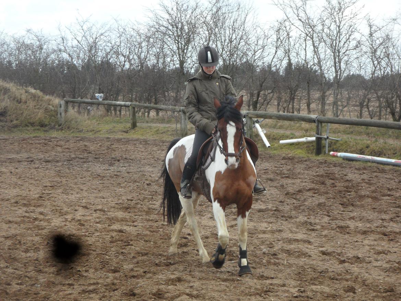 Pinto Santana Indianer Hesten Billeder Af Heste Uploaded Af