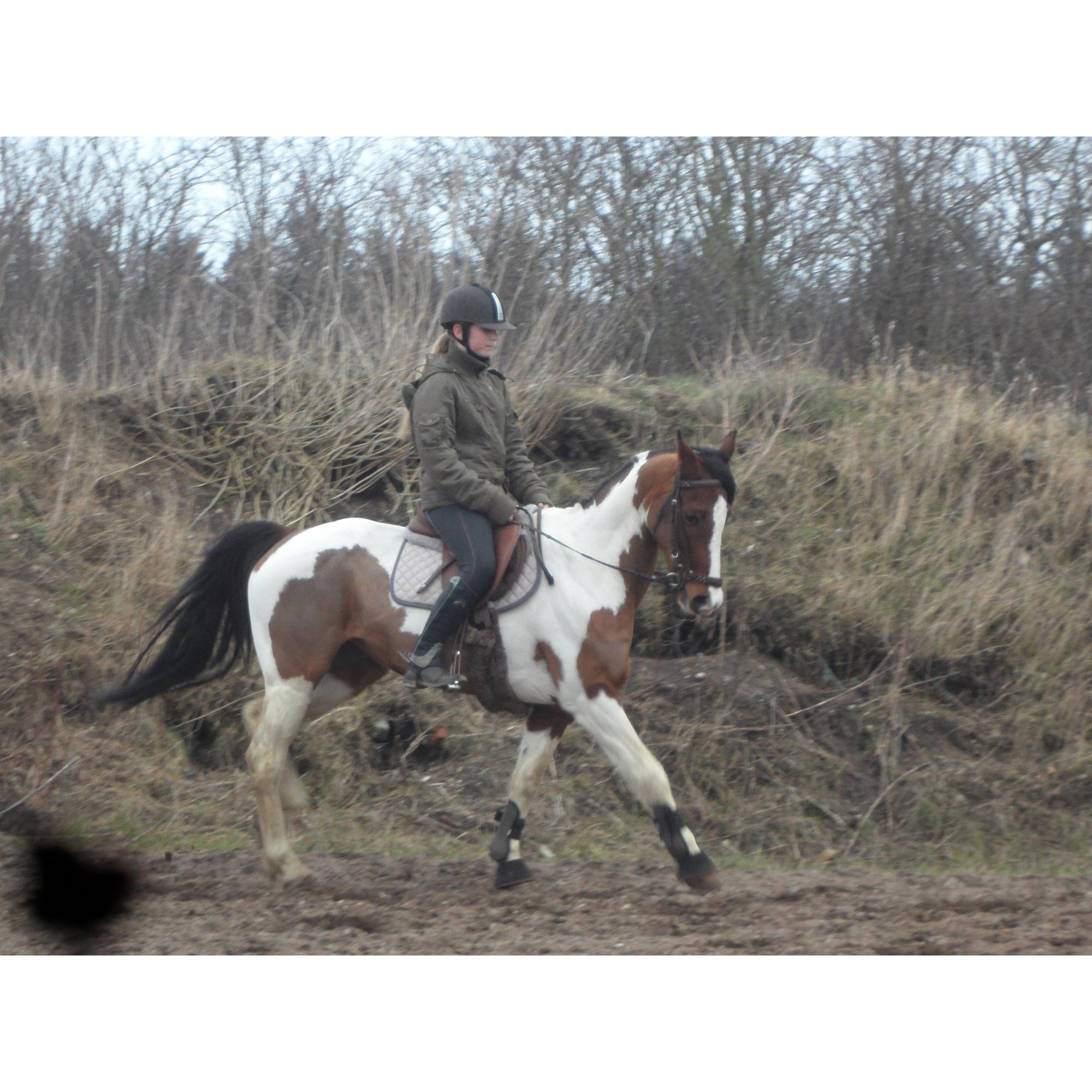 Pinto Santana Indianer Hesten 2003 D 822014 Så Kom Dagen M
