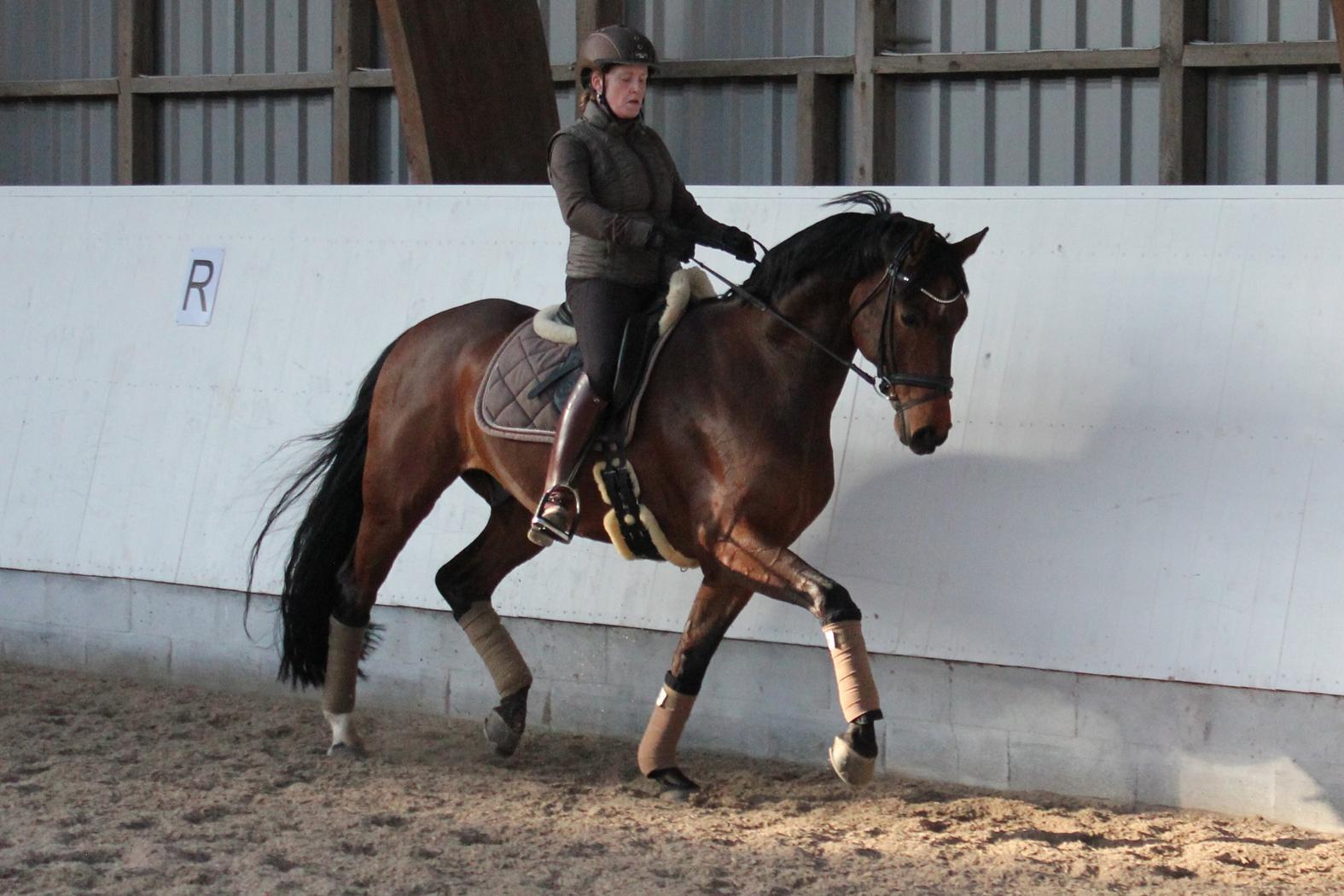 finsk hest