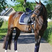 Anden særlig race After Eight´s Chanel / Mutte