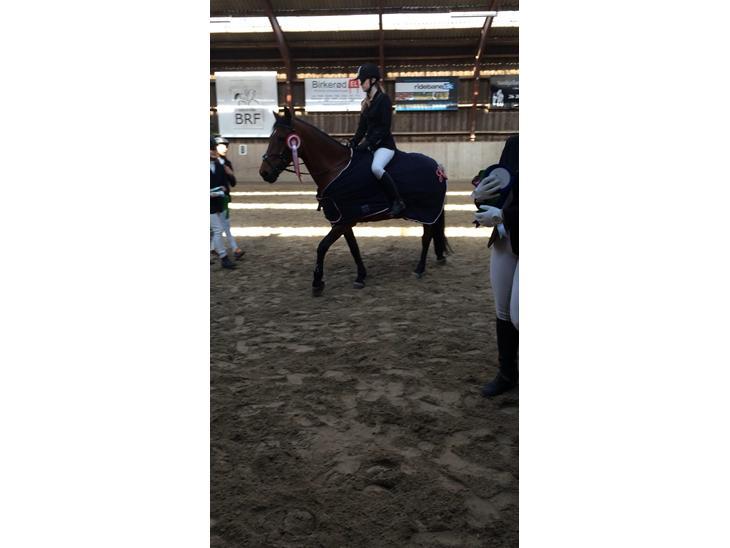 Anden særlig race Smilla - Vandt klubmesterskab 2014, pony spring
