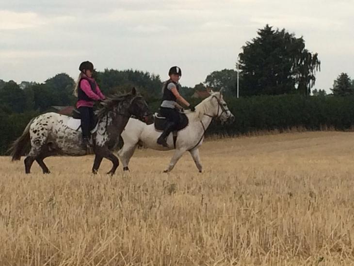 Anden særlig race Skyline - Der rides på stubmark sammen med venninde Celina og hendes pony Clinton. sommer 2014