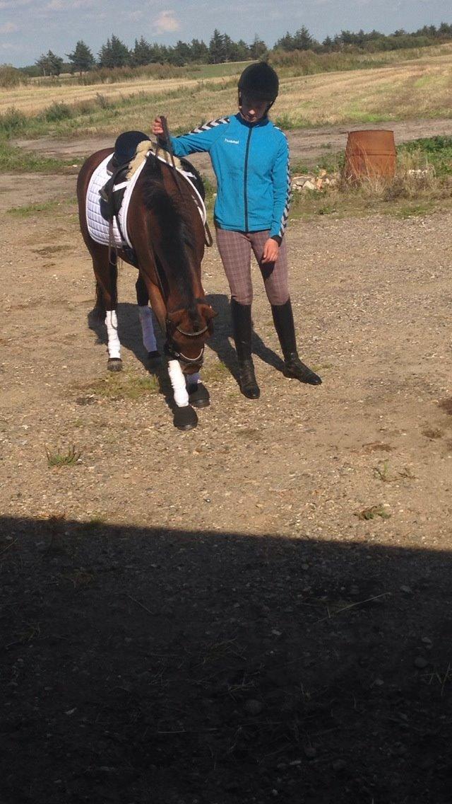 Pinto Vestergårdens Jasmin  <3 - jasse den bedste pony<3 billede 19