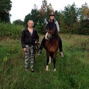 Welsh Pony af Cob-type (sec C) Chopins Toulouse