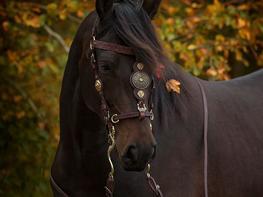 Anden særlig race Brégo - The Warhorse (Cointreau J)