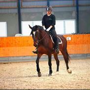 Anden særlig race Malpa [Himmel hest]