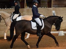 Anden særlig race Pony Gammelby <3
