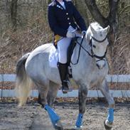 DSP Grønborgs Cassius Clay (B-Pony)