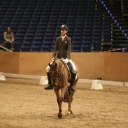 Tysk Sportspony Campari W WE A-pony