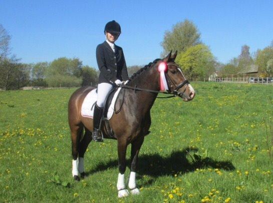 DSP May Dream - Dygtig pony til stævne i Åstrup billede 12