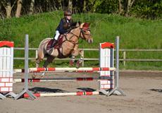 Hollandsk Sportspony Capello Ivo<3 (Min Pony)
