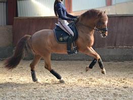 DSP Matthi B Pony!