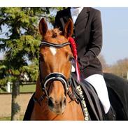 Tysk Sportspony Coccolina De Luxe B-pony