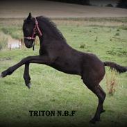Frieser TRITON N.B.F