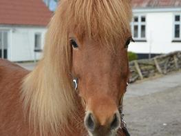 Islænder Kylja degnehuset