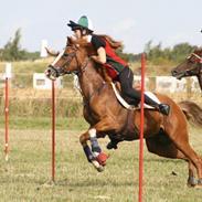 Hollandsk Sportspony Sonja