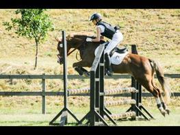 Welsh Pony (sec B) Leedy (malou)
