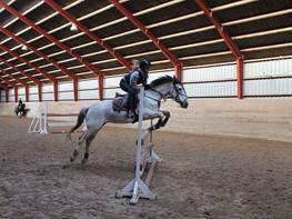 Irsk Sportspony Lady jump