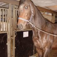 Fuldblod (XX) Frk. Stjerneskud †9/5/2005