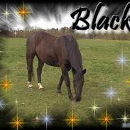 Oldenborg Blackie