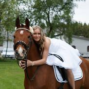 Anden særlig race Prins Obelix ( tideliger hest )