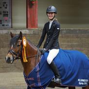 Welsh Pony af Cob-type (sec C) Gribsvads Lady Seventy