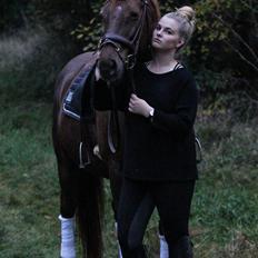 Dansk Varmblod BONA'S FAIR LUCCA