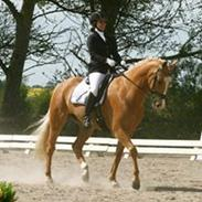Palomino Kjærgaards Golden Champ