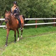 Traver Annabell v (himmel hest)