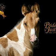 Tennessee Walker | Pride'n'Justice GW