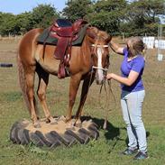 Mustang BestBreed Mustang Kalina