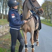 Svensk Sportspony  Casco <3