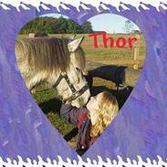 Anden særlig race  Thor<3<3<3 SOLGT