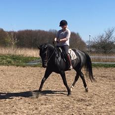 Oldenborg Peterslunds Black Asli