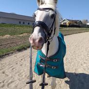 Anden særlig race Irish Patch  [Himmel hest]