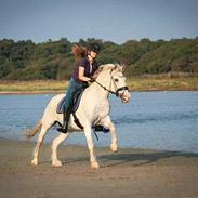 Irish Draught Irish Patch  [Himmel hest]