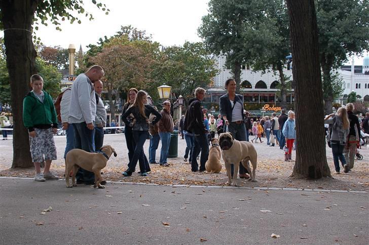 hunde i tivoli