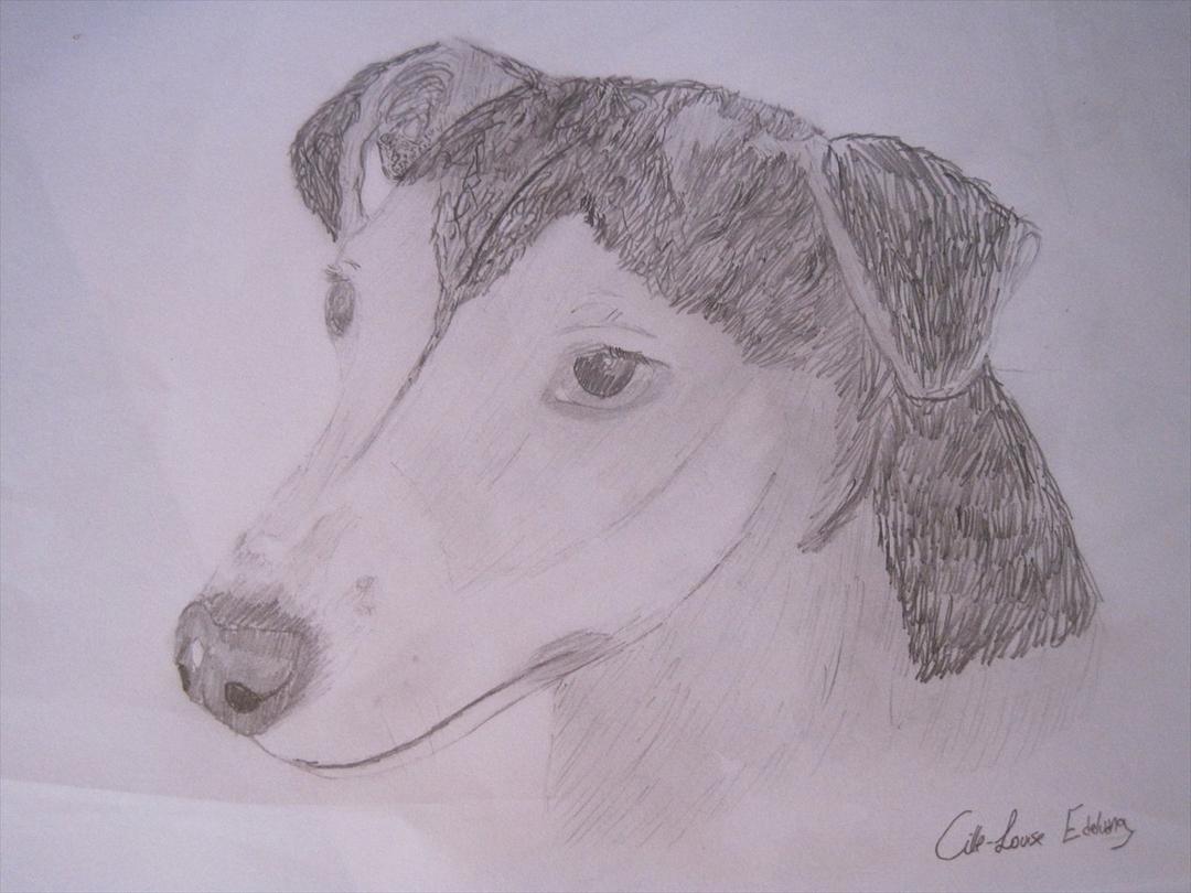 hunde tegninger