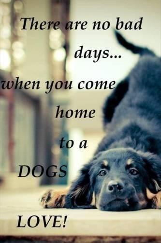 citater om hunde Citater   Tegninger   Fotos fra Signe & Elvis citater om hunde