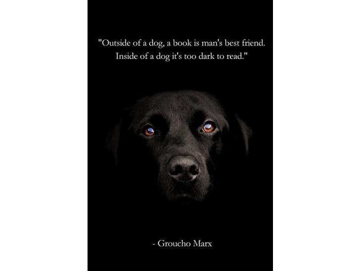 citater om hunde Citater   Tegninger   Uploadet af Signe & Elvis citater om hunde